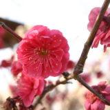 2月講座紹介 (2/8, 2/15)